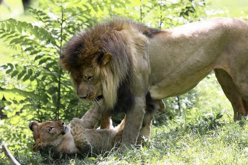 llbwwb:  I'll be good Dad! by Albie Venter.
