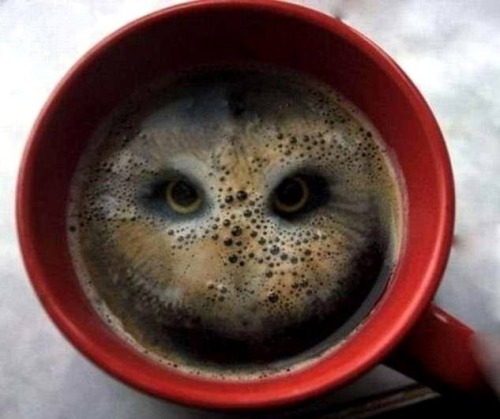 morning coffee buho owl dope