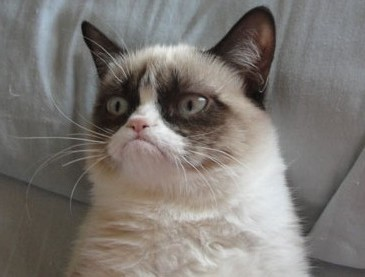 hedgi:  Trolltall fancast- Grumpy cat as Lord Wyldon of Cavall.  perfect fancast is perfect!