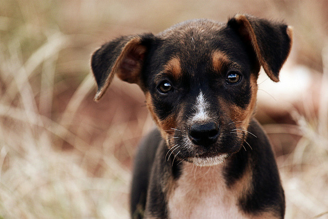 Respeito by Ricardo Cappellaro on Flickr.Puppppppy