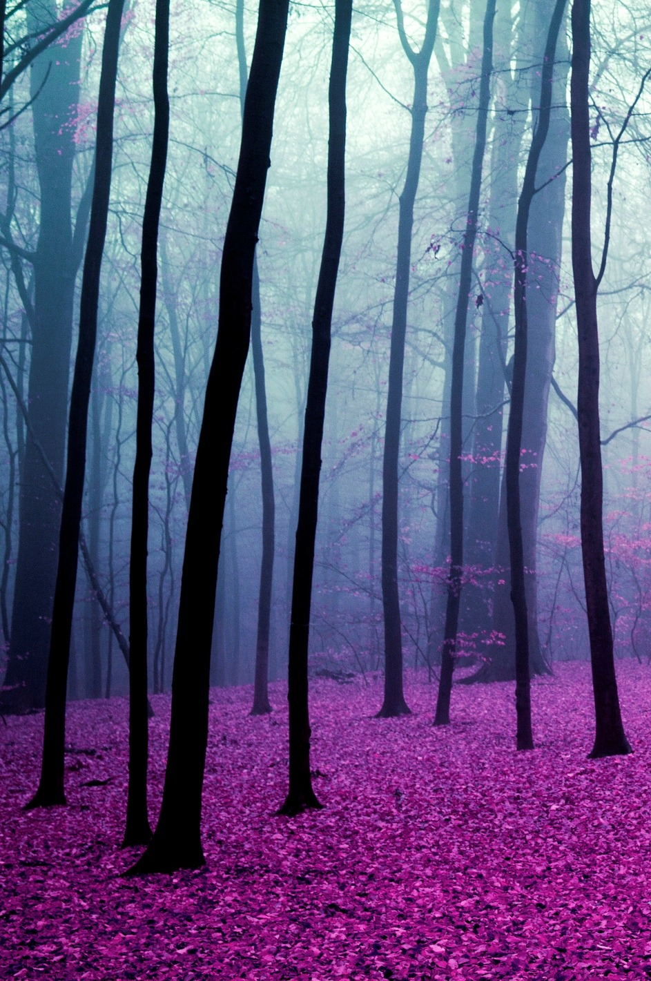 gbirlik:  Magic forest (by EliseEnchanted).