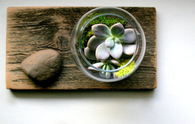 etsygoodies:  (via Urban Wilds Desk Top Weathered Wood Terrarium Set by CaptainCat)