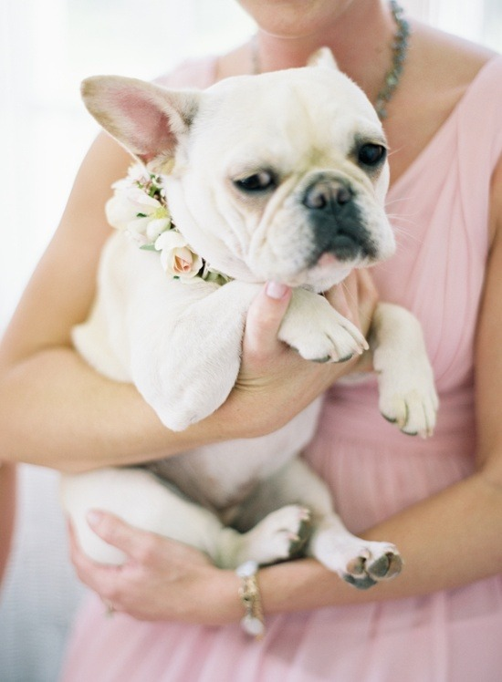 bride2be:  i'm dying for this french bulldog <3 look at its sweet little flower collar!  get in my life you sweet little pup! photo by jen huang