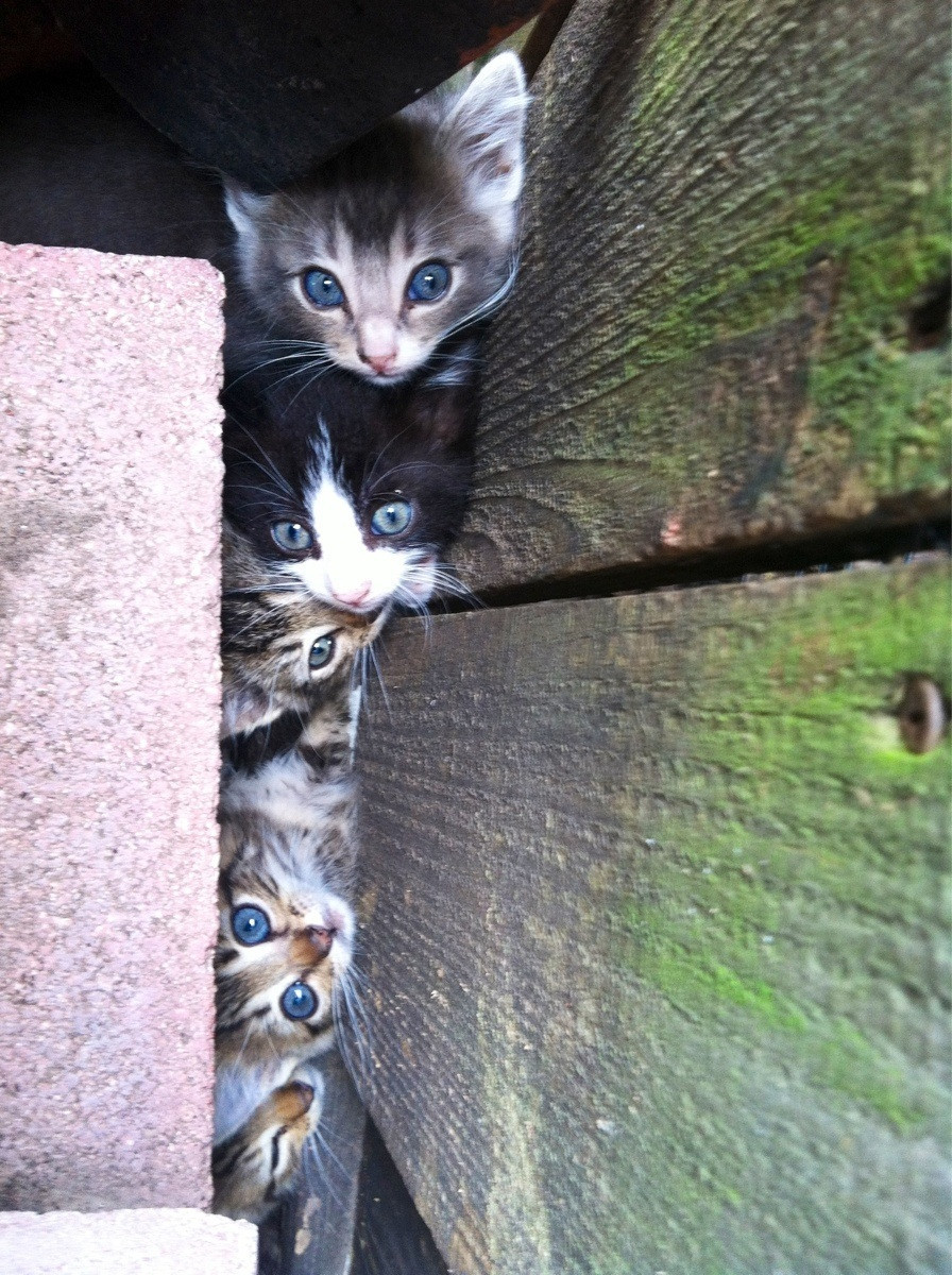 magicalnaturetour:  A cute, cuddly kitten infestation