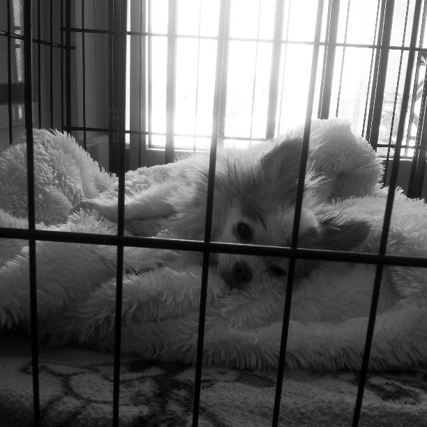 Buckley behind bars. So pitiful.