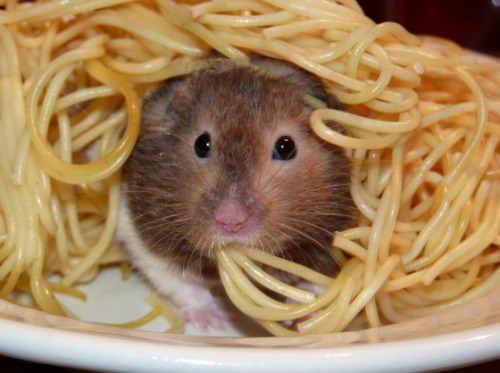kupbon:  eat pasta - be happy !!