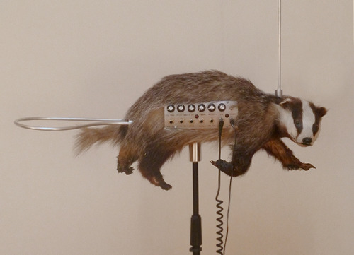 The Badgermin: a dead badger turned into a theremin