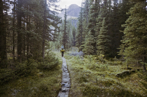 redwoodcollective:  Banff National Park - Day 2 (by spencewine)