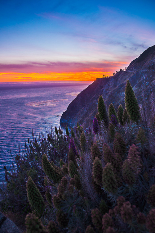 frigxd:  Sunset Light in Big Sur