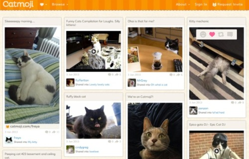 morpheusmedia:   A social network JUST for cats. Hallelujah.