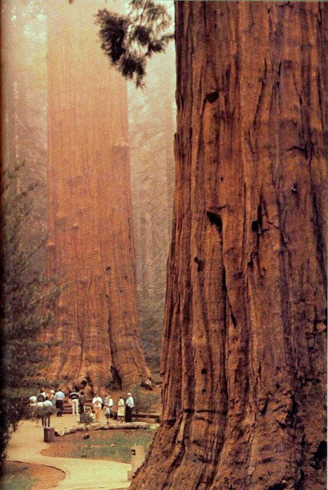 just-breezy:  The Redwoods, California