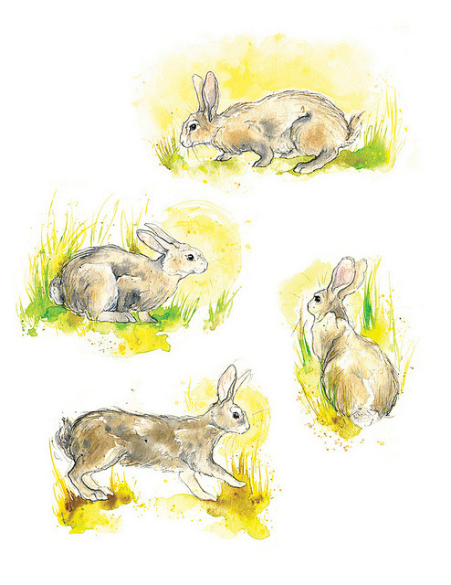 Wild Rabbits: In the Sunshine on Flickr.