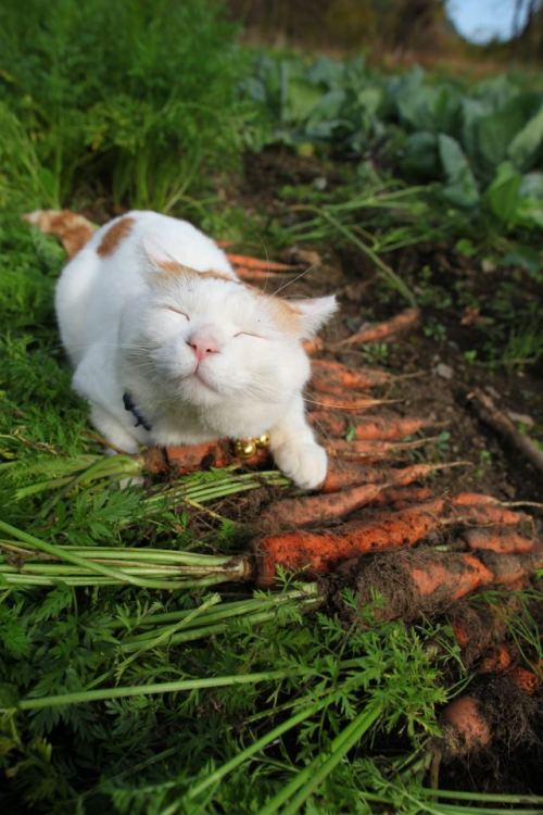 robotseatcandy:  finds your carrot harvest most pleasing  i love cats so much i never knew i could feel this way