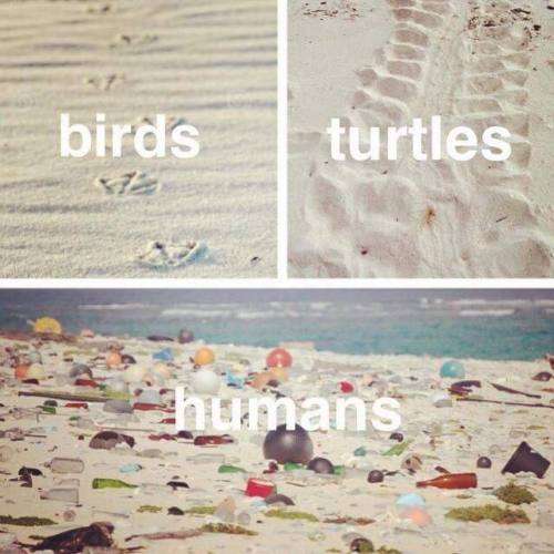 birds nature fish beach bird ocean sea humanity Fishes Humans turtles environment turtle plastic eco natural environment pollution ecology environmentalism waste plastic bag garbage sea animals earth liberation front earth liberation earth first deep ecology birds turtles humans ocean of plastic sea of plastic