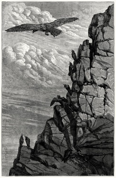 oldbookillustrations:  The eagle and the crow. Ernest Griset, from Æsop's fables, with text based chiefly upon Croxall, La Fontaine and L'Estrange, London, New York, 1869. (Source: archive.org)