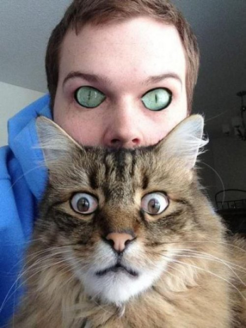 collegehumor:  Cat and Person Eye Swap Is Fueled By Your Nightmares Oh, catsitting shouldn't be a problem at all. Nothing bad will happen. Nothing. I swear.
