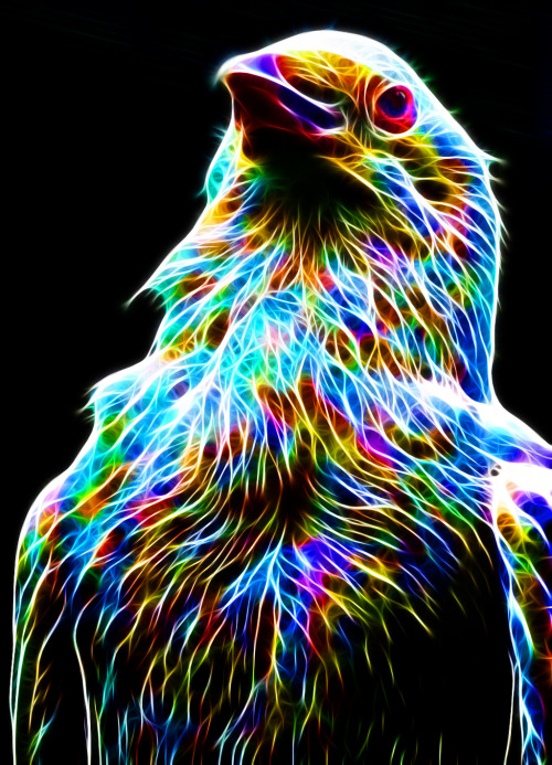 tallanvor1834:  Colorful Crow by *megaossa