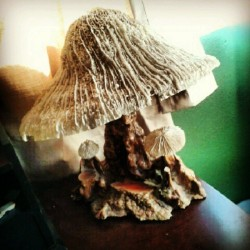 My night light. Given to me after a friend got very ill and died.  #mushroom #shrooms #shrooming #fungus #mushrooms #lamp #light #art #instacool #instalamp #nightlight #hippieshit
