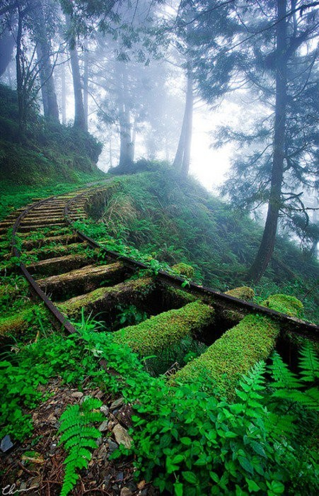 panopticaust:  Taipingshan National Forest, Taiwan Source