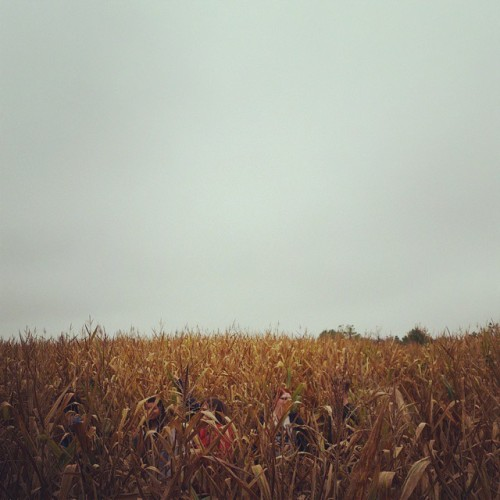 jonahscottva:  Corn maize. See what i did there?