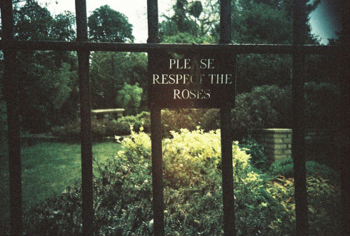 arquerio:  respect the roses by golfpunkgirl on Flickr.