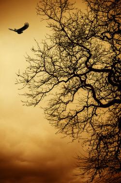 crescentmoon06:  Root & Wings, ByEvangelos Tsigaridas.