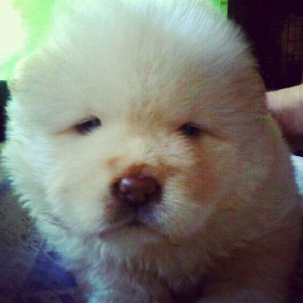 Good Morning. Ang cute ng teddy bear ko! Hehe :-)