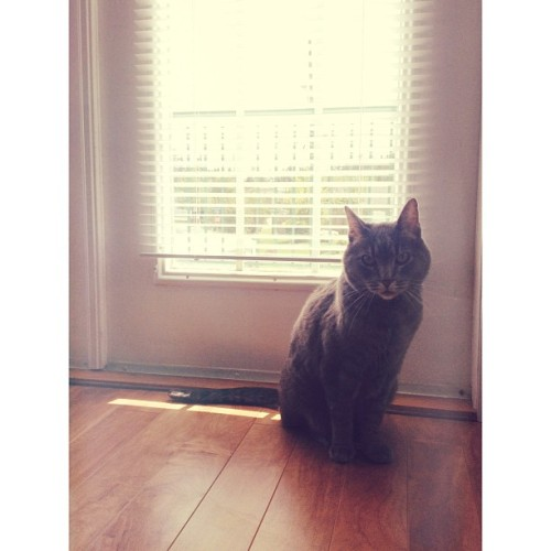 Harry 💓 #animals #harry #love #cat #beautiful