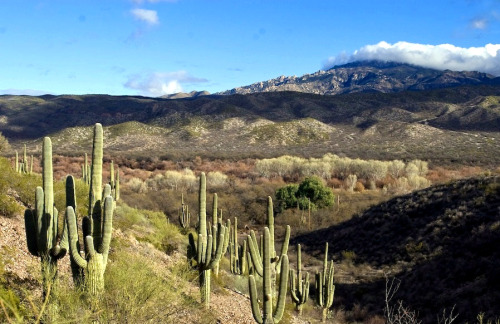 New listing: Caretaker needed for a ranch located in southern Arizona. Details: The Caretaker Gazette's latest email broadcast. www.caretaker.org