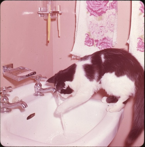 Suki in the Sink, 1960s  Doris Thomas