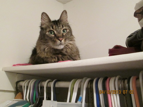 get out of there cat. i have enough junk in the closet as it is.