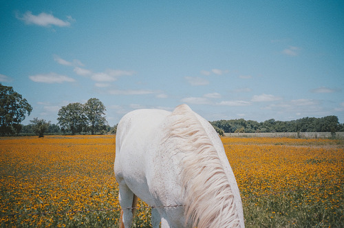 untitled by Cody Cobb on Flickr.