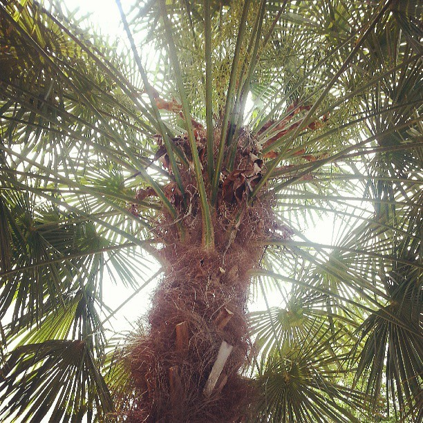 I love my dad's palm tree.