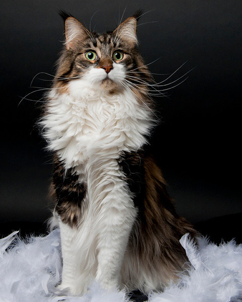 mostlycatsmostly:  (via Creative Photography)