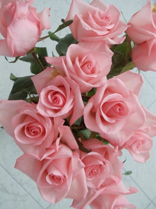 pastel-cutie:  pink roses are my fave <3