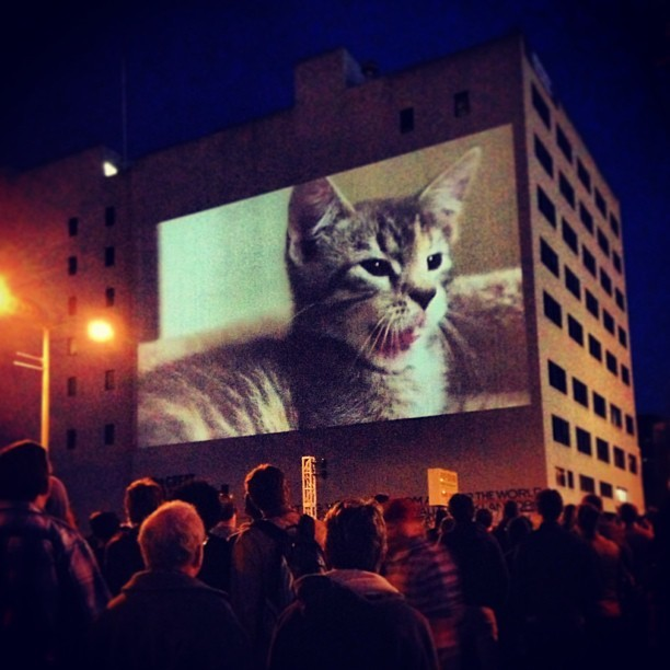 It's happening. Cute, cuddly, adorable kittens projected on The Great Wall of Oakland for the Oakland cat video festival. #cats #catsofinstagram #cat #oakcatvidfest #oakland #spca  (at Great Wall of Oakland)