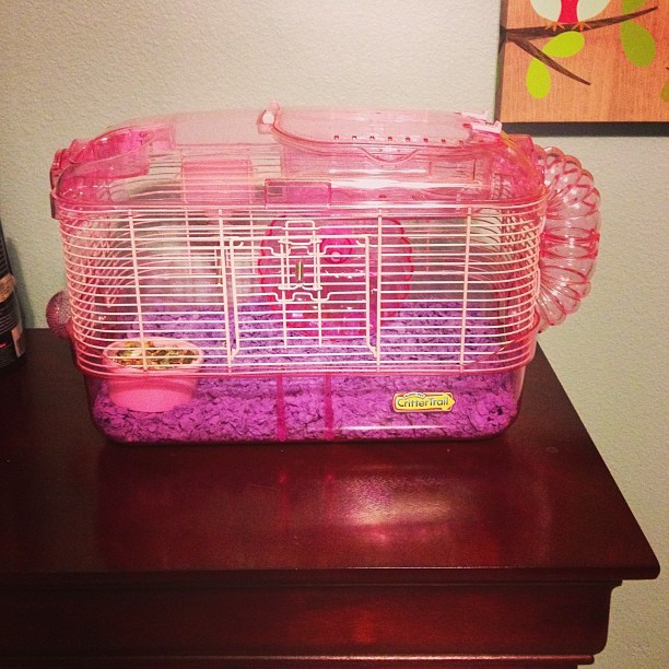 Got a hamster:3 #cute#princess#pink#hamster#excited