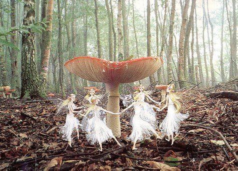 fairys shrooms magical mystical life