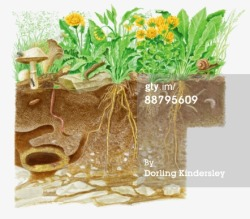 Source: http://www.gettyimages.com/detail/illustration/digital-cross-section-illustration-of-soil-royalty-free-illustration/88795609