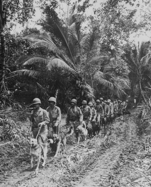 greatestgeneration:  USMC Raiders and their dogs in Bougainville (Papua New Guinea) in 1943. The Raiders were elite units assembled by the USMC to conduct amphibious light infantry warfare. You can read more about the men and their dogs on their official website.