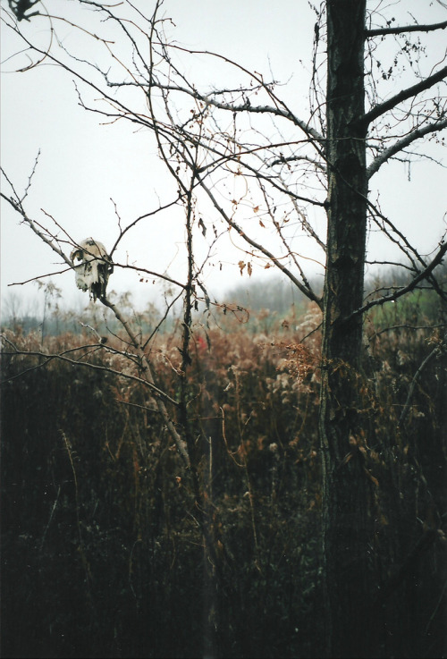 italdred:   Skull and Tree 2 (by AndyM.)