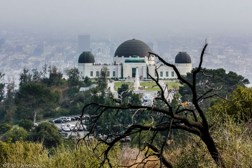 va103:  Dead tree, Griffith Observatory, and LA in smog