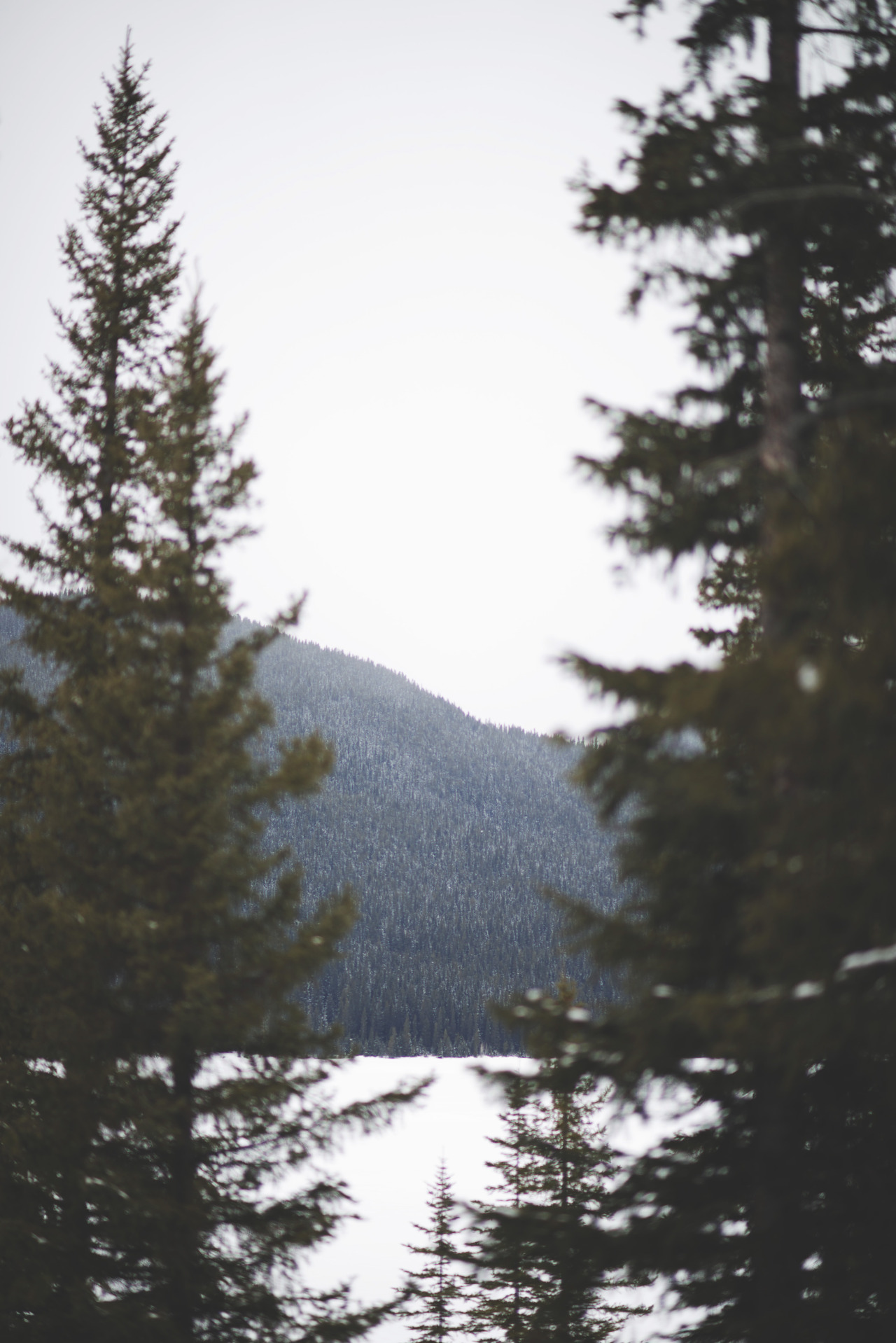 teapalm:  meow-tins in kananaskis by Tasha Marie