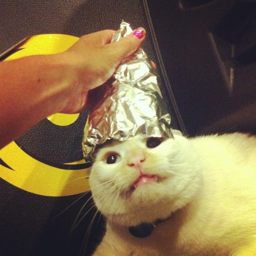 "derpycats:  ""A tinfoil hat a day keeps the aliens and government mind control machines away."" Or however that saying goes."