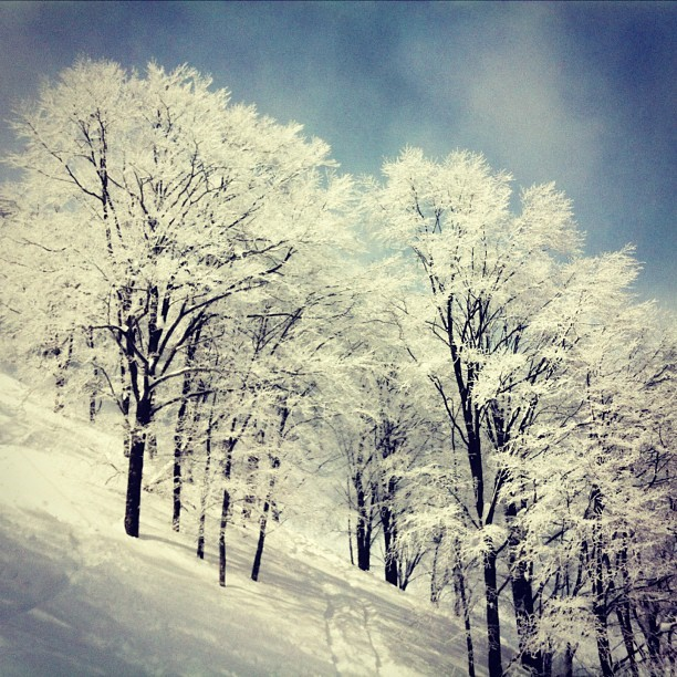 Amazing trees freshly painted white at Hakuba Cortina. (at Cortina Resort, Hakuba Japan)
