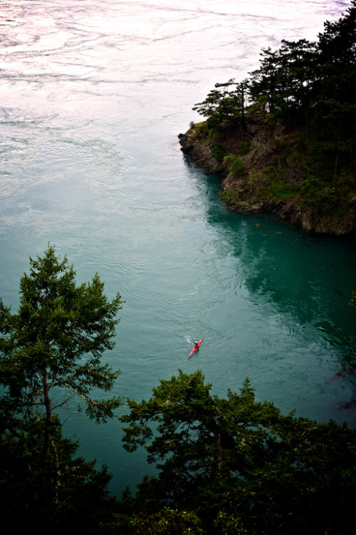 theoceanrolls:  Red on Green (by andybokanev)