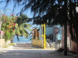 w-ildwind:  Took this in Caye Caulker, Belize lovely island  TWO WEEKS. my goodness.