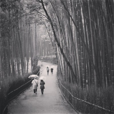 Bamboo Forest #japan #kyoto