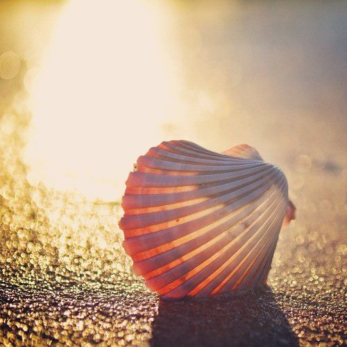 summer | via Facebook on We Heart It - http://weheartit.com/entry/61713327/via/laurieleelias   Hearted from: https://www.facebook.com/photo.php?fbid=357938980970993&set=pb.137081866390040.-2207520000.1368798324.&type=3&theater