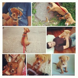 3 years ago this week, I rescued this li'l man and brought him into my home. My life has forever been changed for the better.